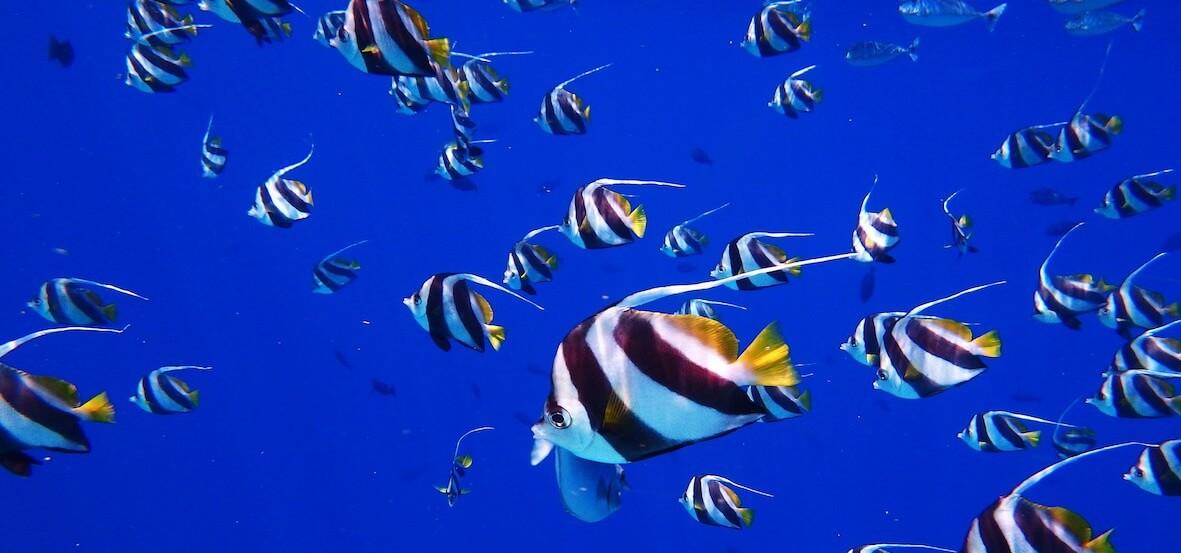 モルディブの海
