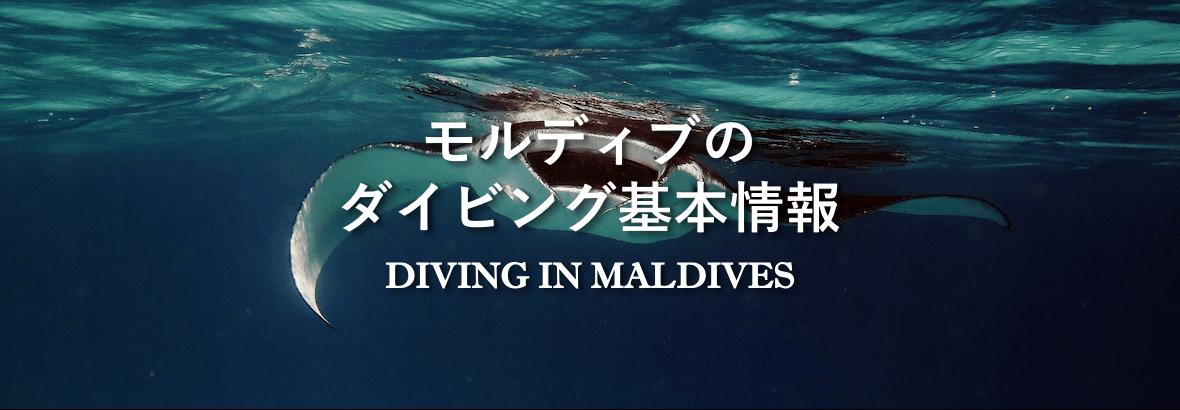 ダイビング基本情報
