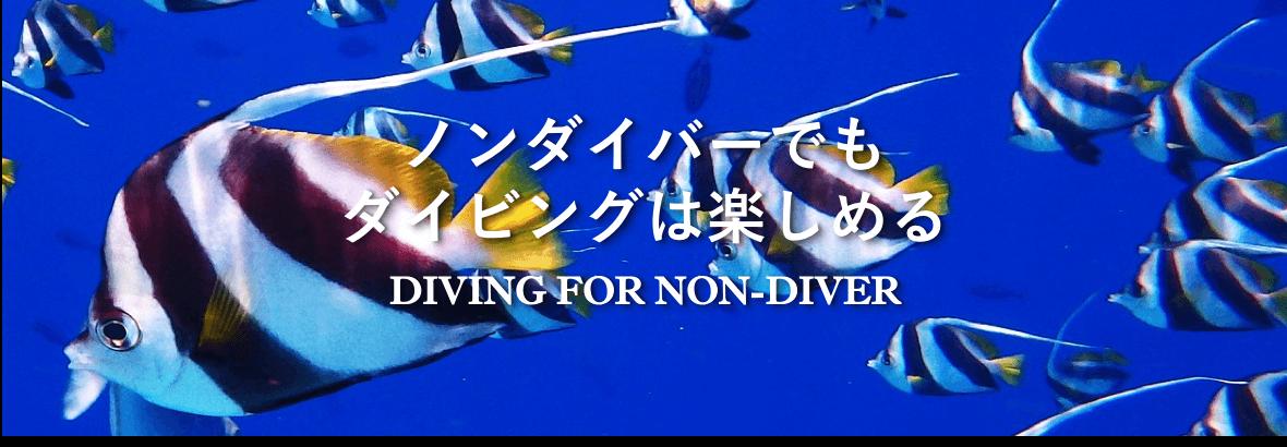 ノンダイバーのためのダイビング情報