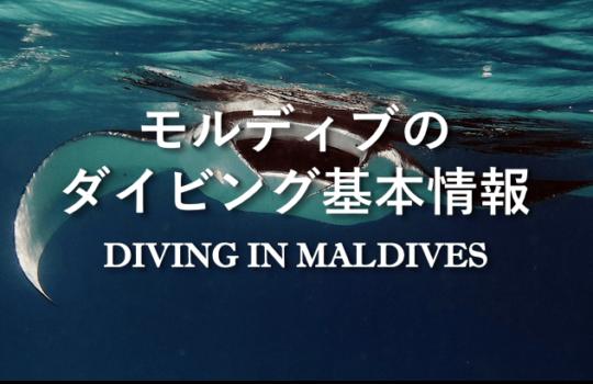モルディブのダイビング基本情報